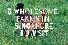 farms-in-singapore