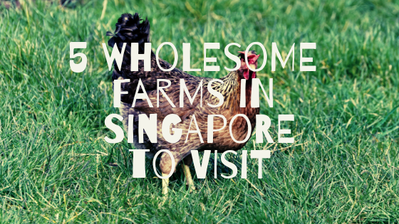 5 Wholesome Farms in Singapore to Visit